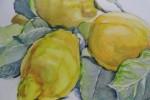 5272 - Otoño Frutas. Limones